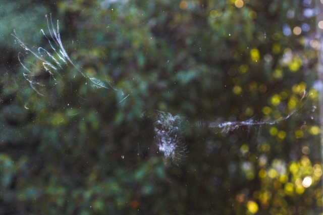 Bird Spirit-0631